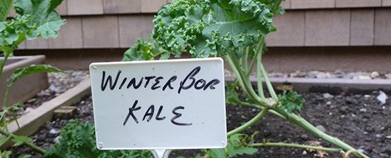 3 Essential Tips for Preparing Kale in Vata Season