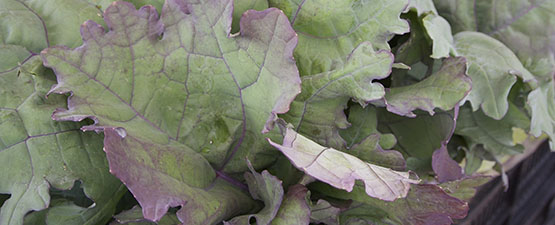 """Jumping on the """"National Kale Day"""" Bandwagon"""