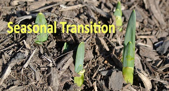 Maintaining Your Health During the Spring Seasonal Transition