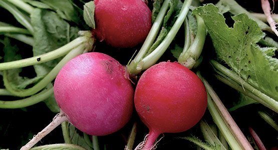 The Healing Power of Seasonal Foods: Radishes to the Rescue!